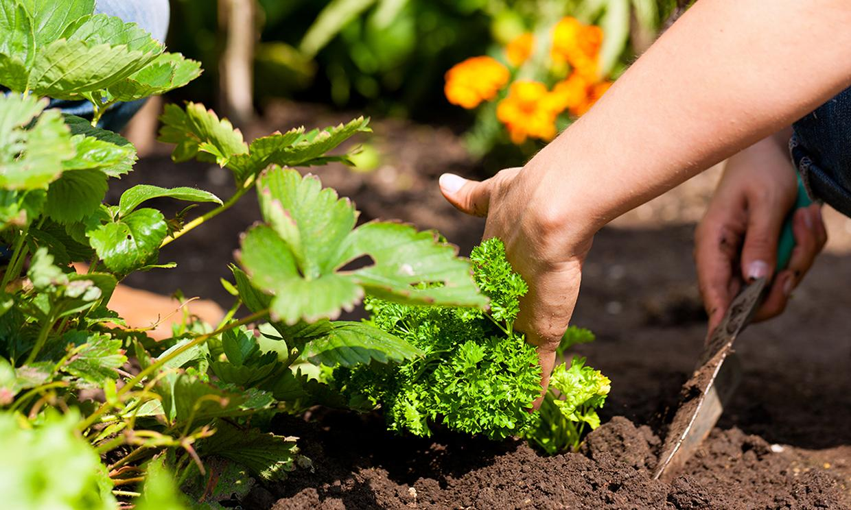 Tips and Tools for the Beginner Gardener