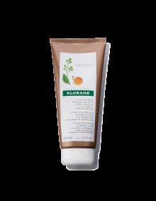 Shampoo-cream with Abyssinia oil