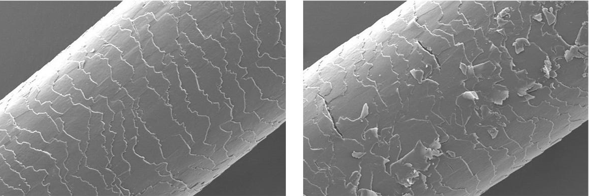 Close-up of hair fiber not exposed to pollution vs exposed to pollution