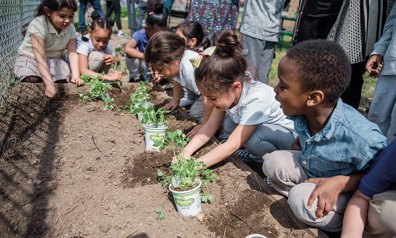 Elementary school children planting a garden